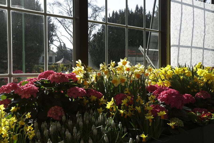 Flowers Exhibitions in Winter - Get in the right mood for spring