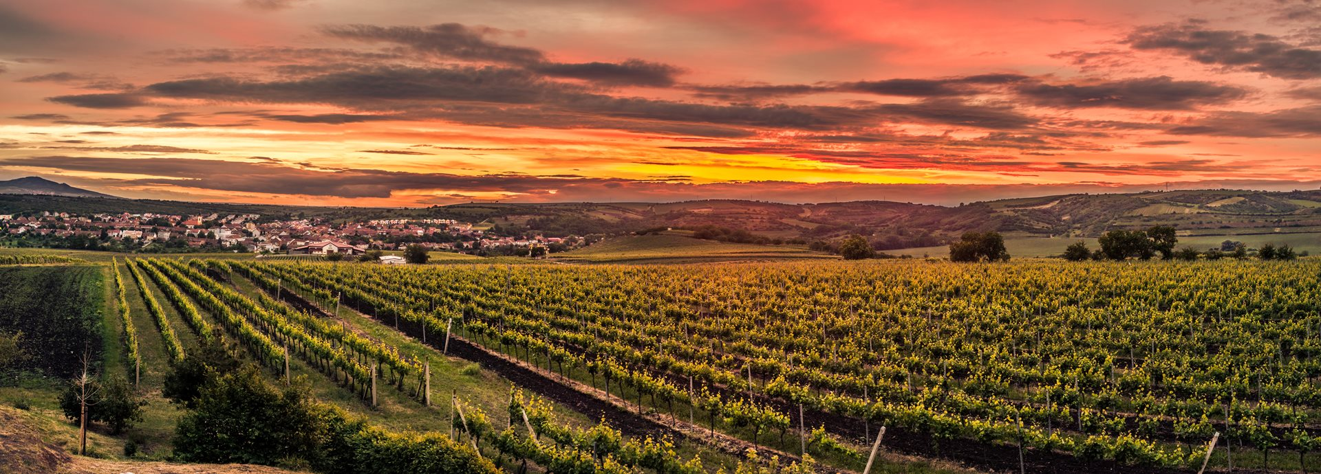 The Appeal of Viticultural Architecture