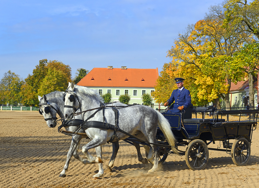 National Stud Farm and Landscape for Breeding Horses in Kladruby nad Labem