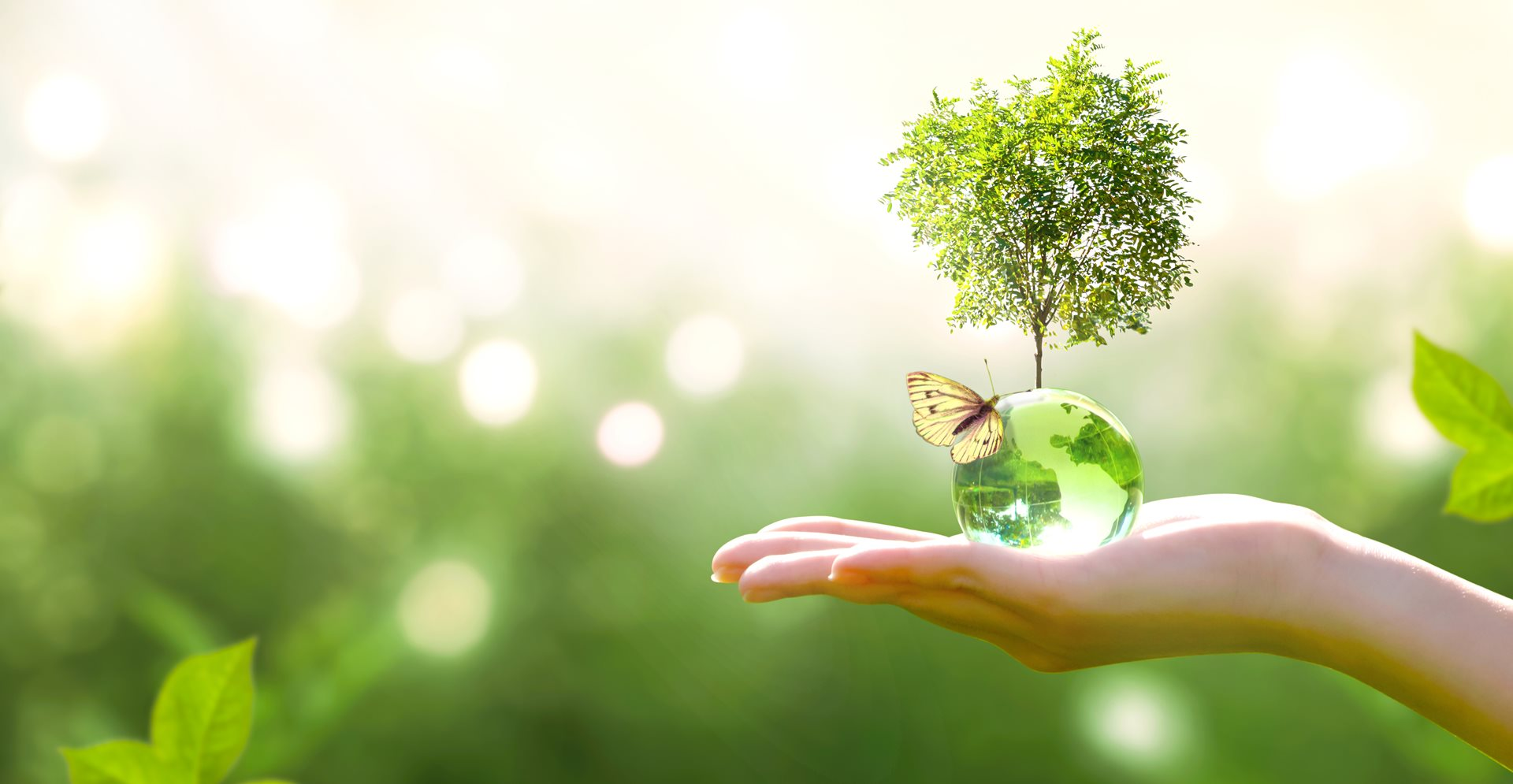 Sustainability and green meetings