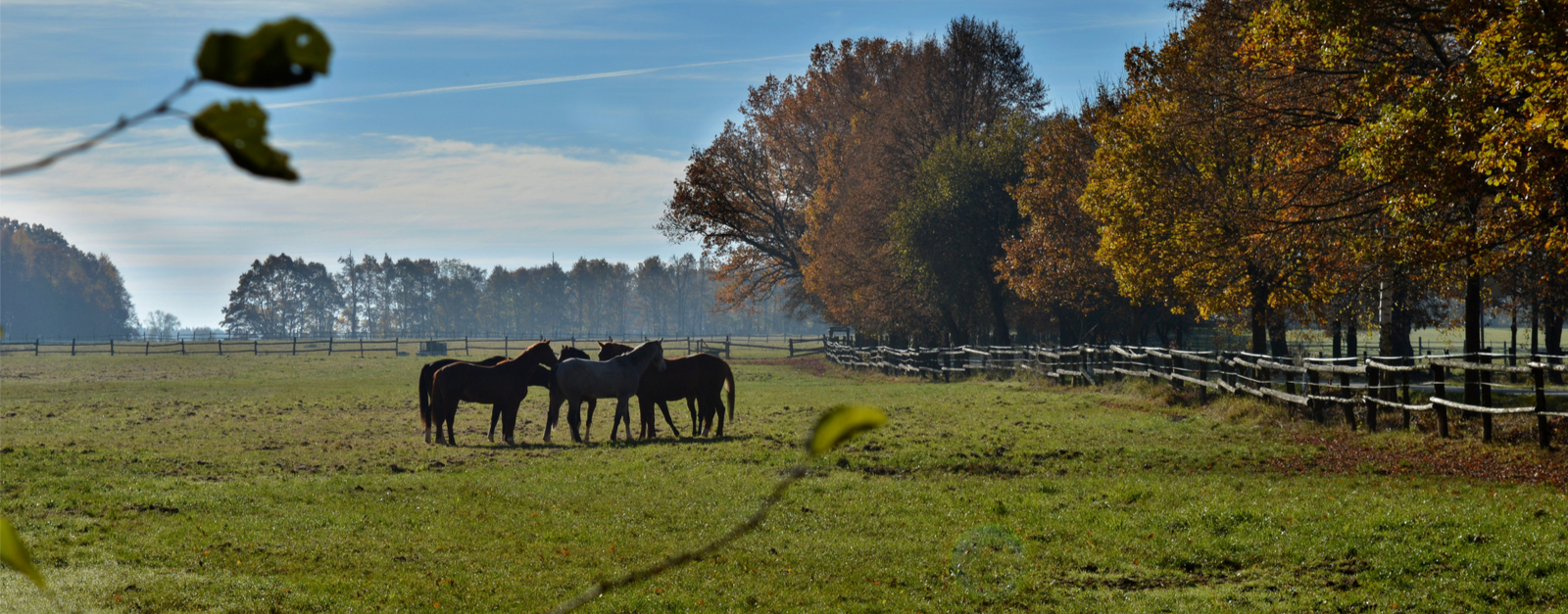 Discover a Horse Riding Paradise in South Bohemia, the Czech Republic